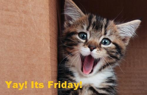 Fridaycat.jpg