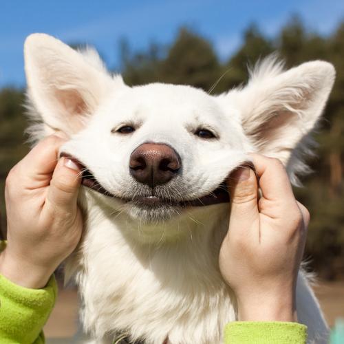 dogsmiling.jpg